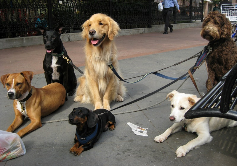 That Viral Craigslist Dog Walking Ad Isn T What It Seems And Here S The Real Story