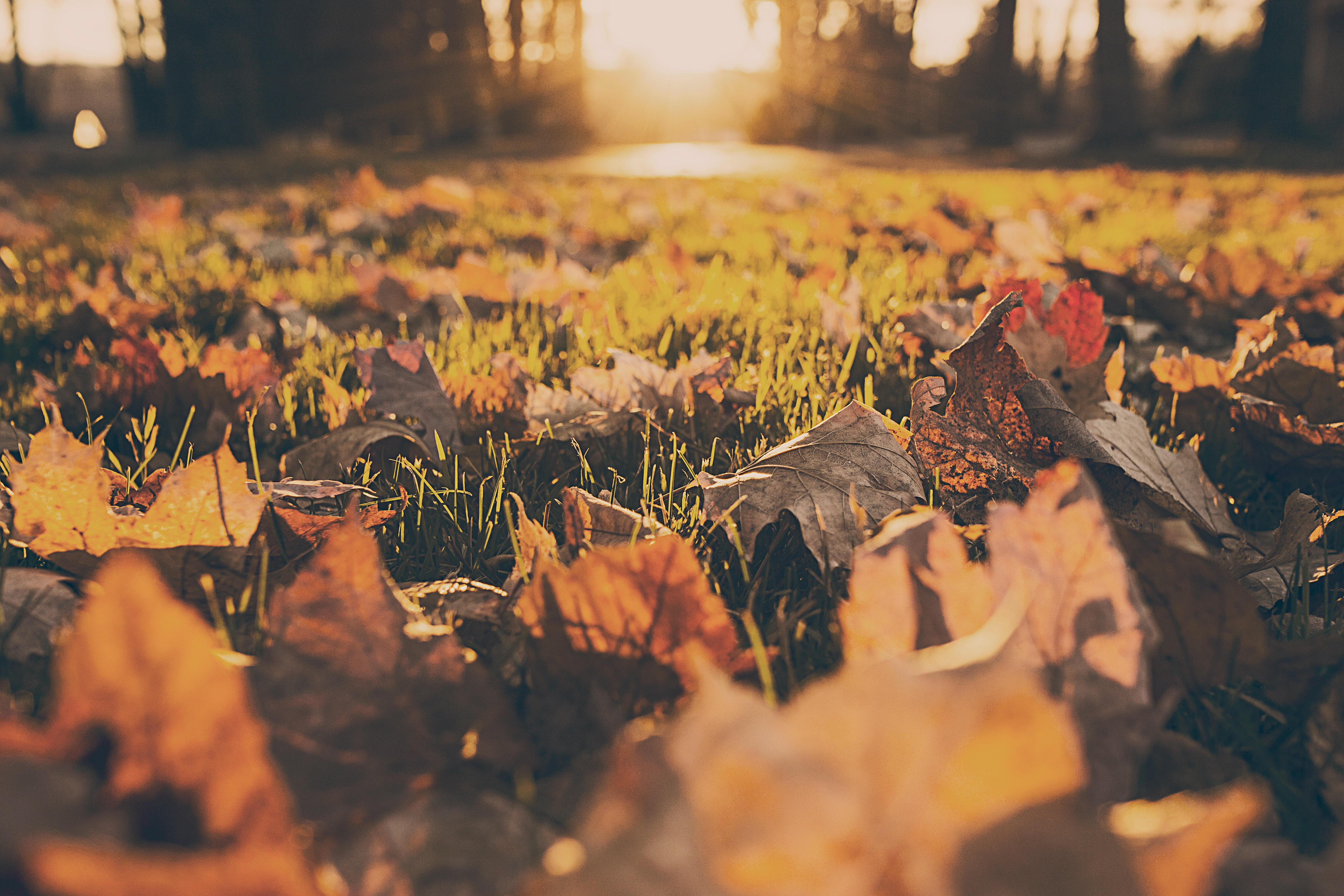10 Funny Fall Quotes That Will Have You Laughing Your Way ...