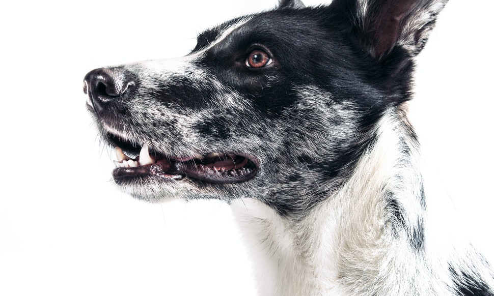 6 Weird Things You Didn\'t Realize Your Dog Was Hardwired To Do