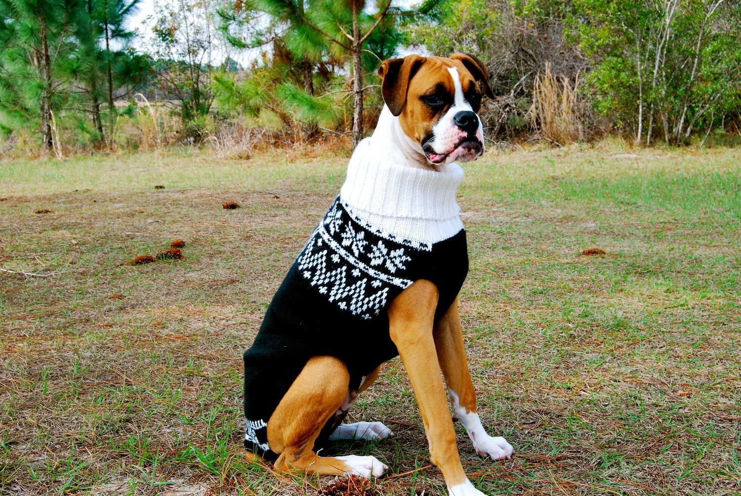 13 Dog Sweaters To Keep Your Best Friend Warm This Winter