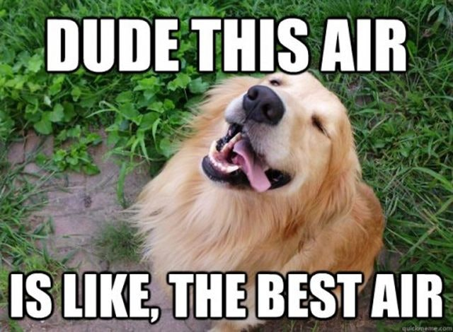 Image of: Views The Smart Canine 11 National Dog Day Memes That Are Just As Hilarious As They Are Cute