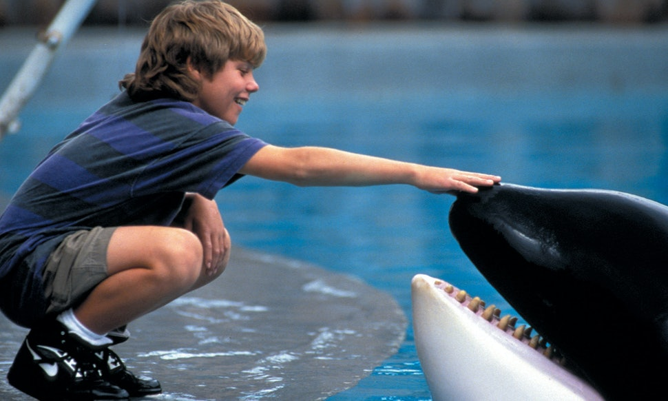 What the whale from free willy taught us about orcas long before what the whale from free willy taught us about orcas long before blackfish hit theaters voltagebd Gallery