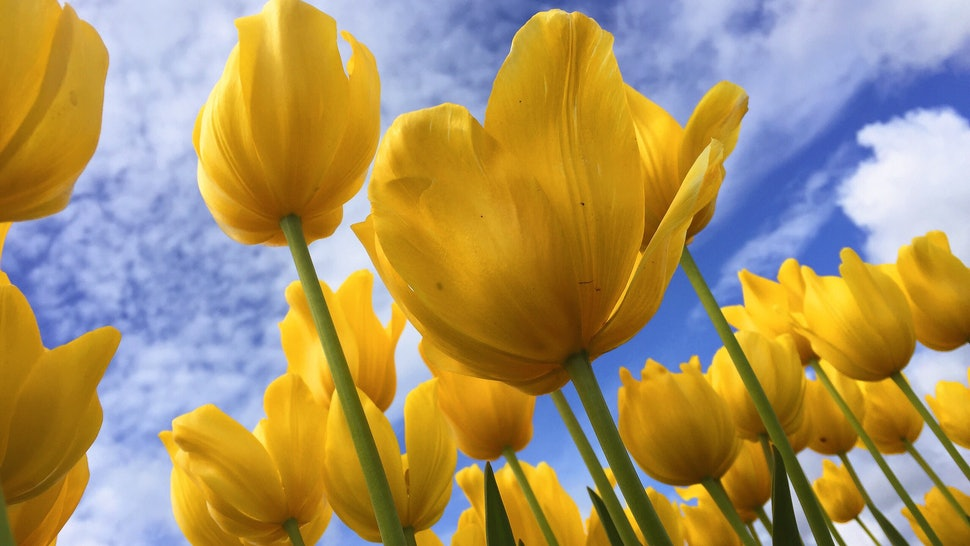 What Is The Spring Equinox The First Day Of Spring Is Reason To