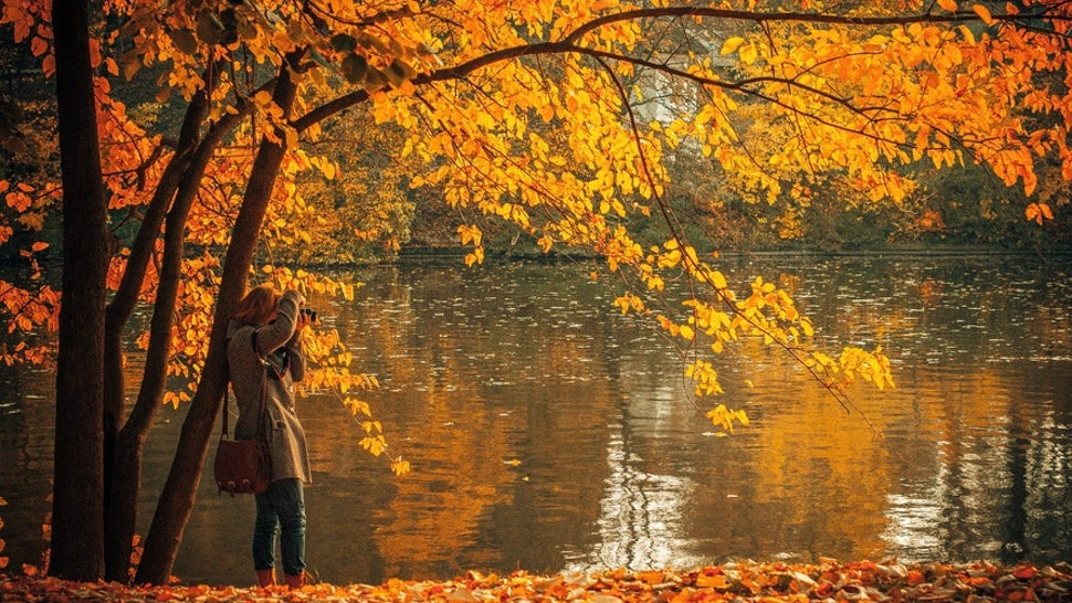 10 Fall Quotes About Leaves That Will Make You Want To Jump In A