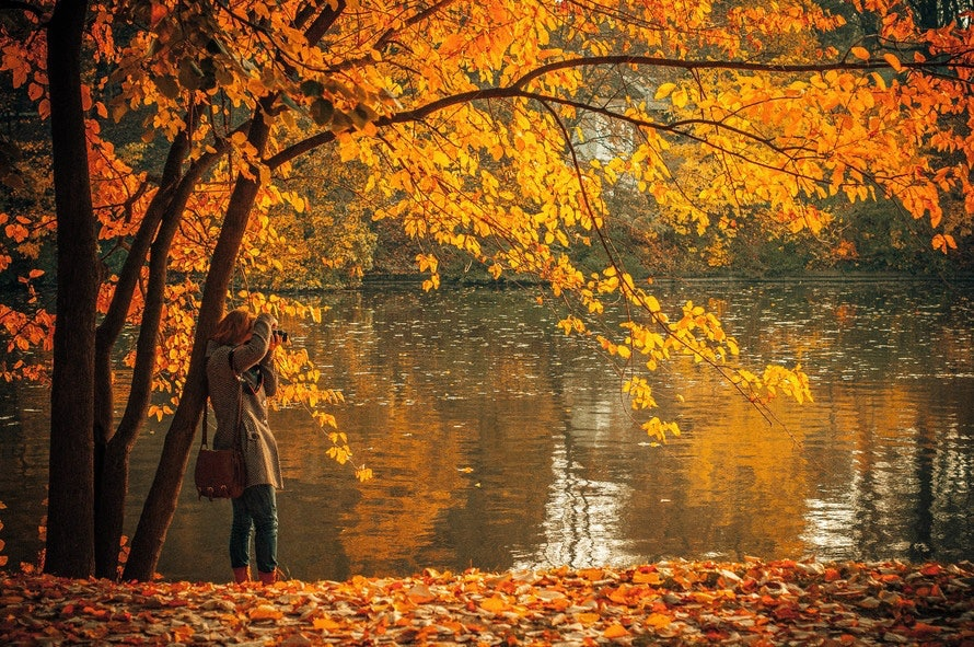 10 Fall Quotes About Leaves That Will Make You Want To Jump In A Pile Of  Them