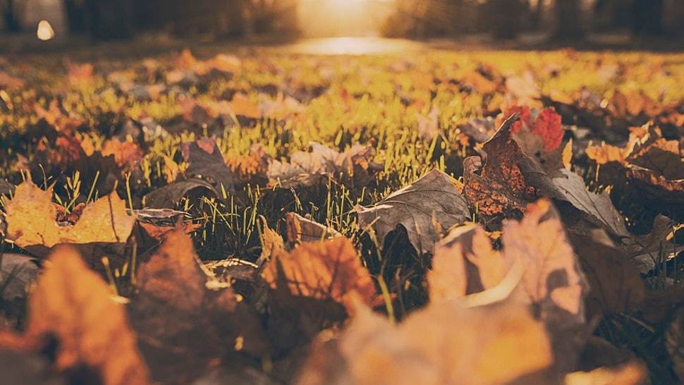 7 Symbolic Meanings Of Autumn That Remind Us How Amazing This Season