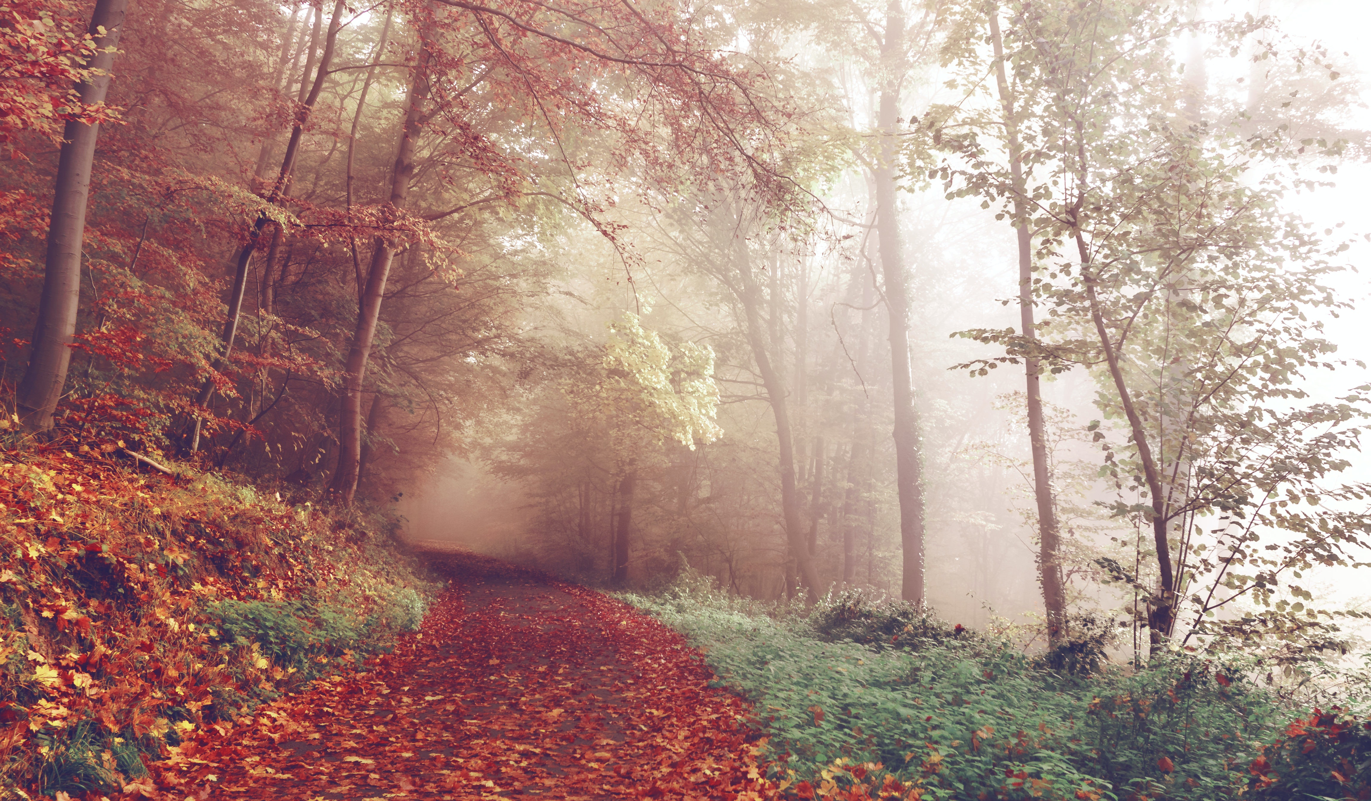 Amazing 13 Inspiring Fall Quotes For The First Day Of Autumn 2016 Thatu0027ll Make You  Wish The Season Lasted Forever
