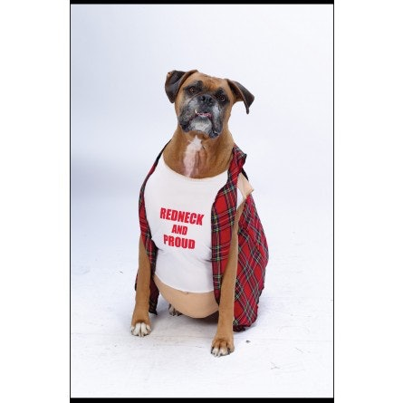 21 pet halloween costumes that are adorableridiculousemotionally look guys its a sugarbear costume for dogs at the very least yall better redneckognize that a dog with a t shirt and a beergut is going to get loads of solutioingenieria Images