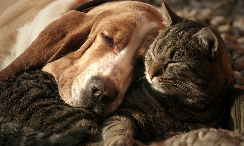 hook up cuddling