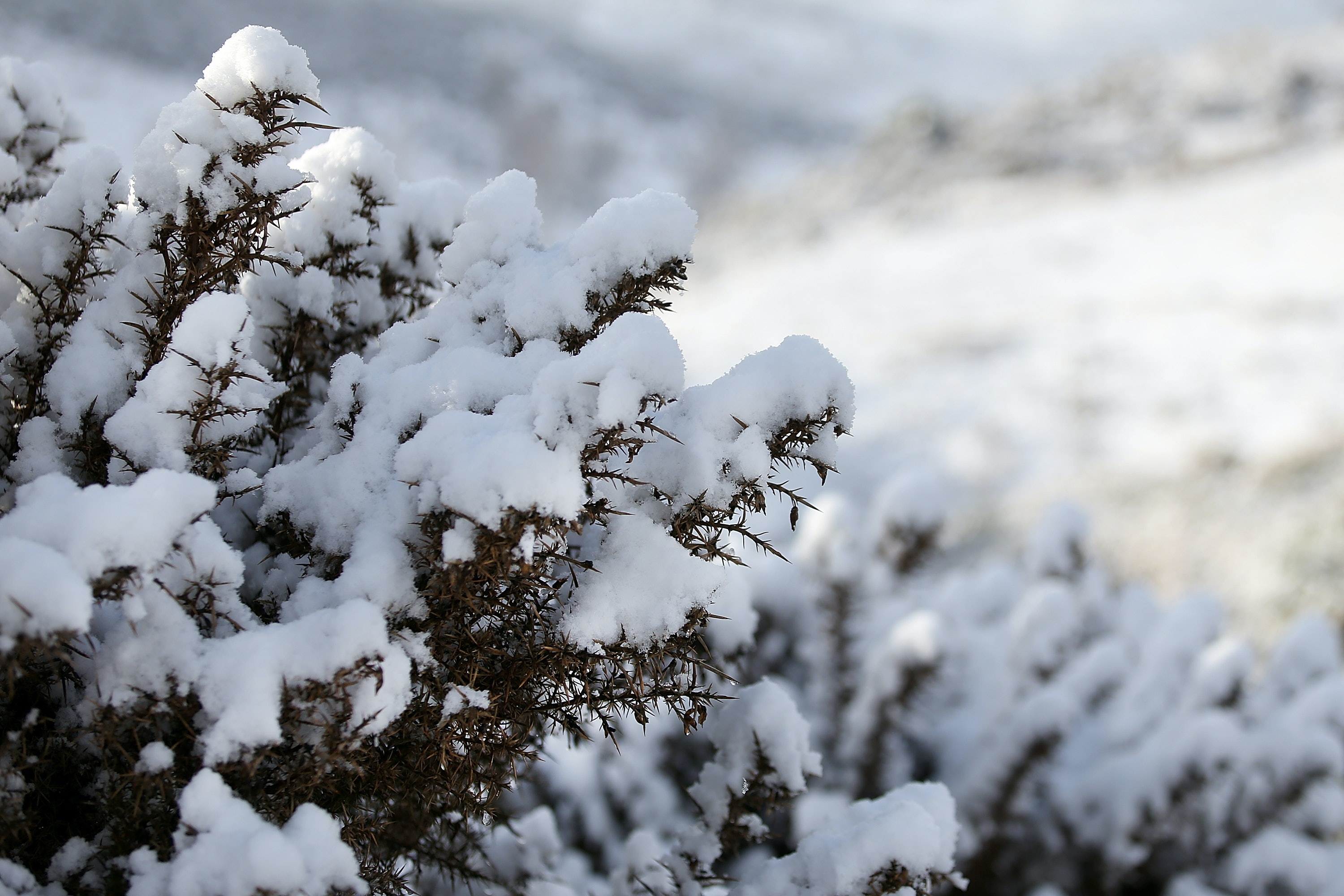 quotes about winter from literature that make the perfect