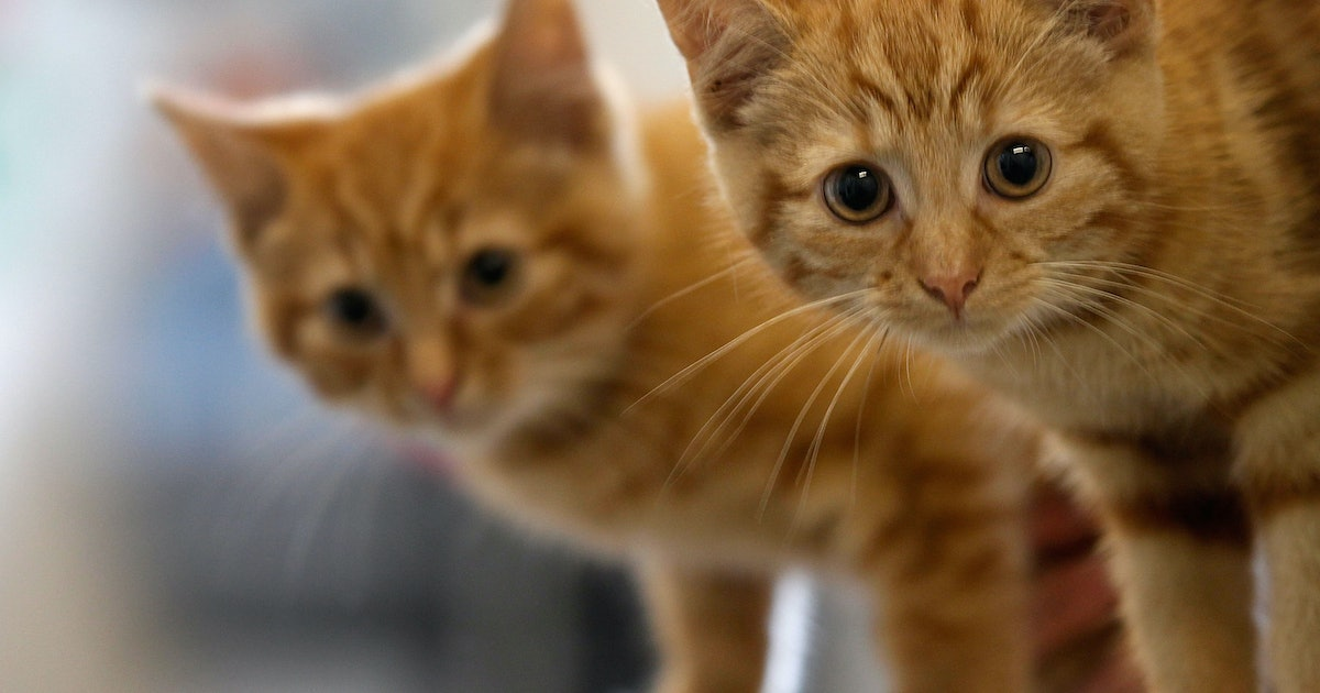 The State Department's Cat Photo Email Is Perhaps The Cutest Pic You'll See ...