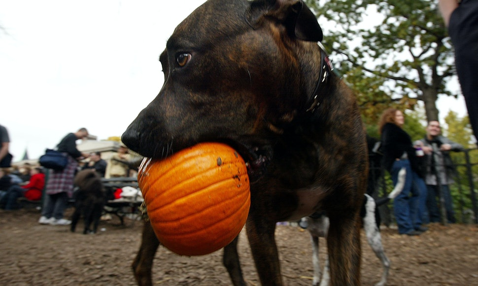 how to keep your pet safe on halloween according to vets