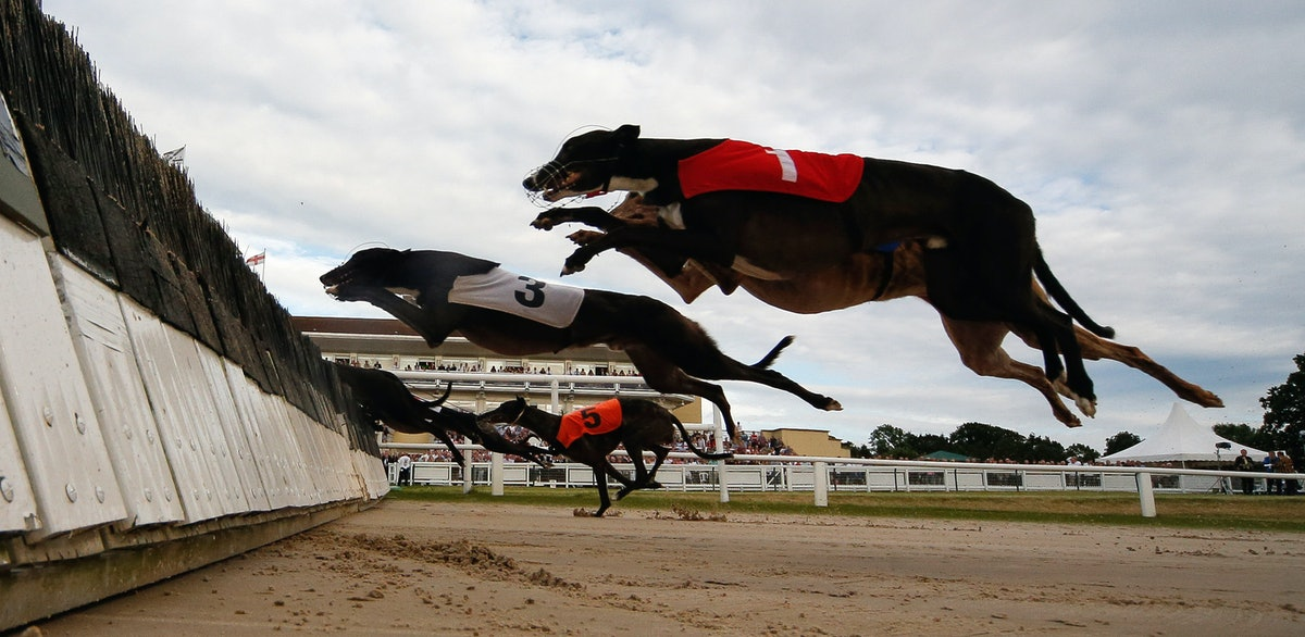 Florida Banned Greyhound Racing — Now, Groups Will Help You Adopt These Dogs