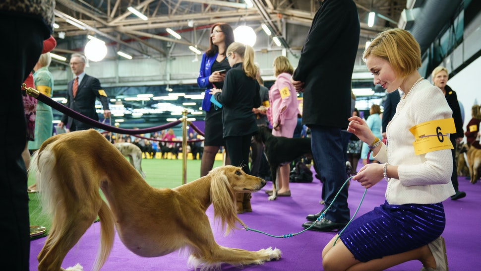 10 2018 westminster dog show dogs that are best in show