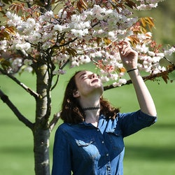 A woman smells cherry blossoms in the spring. Seasonal allergies can increase the likelihood you might get sick.