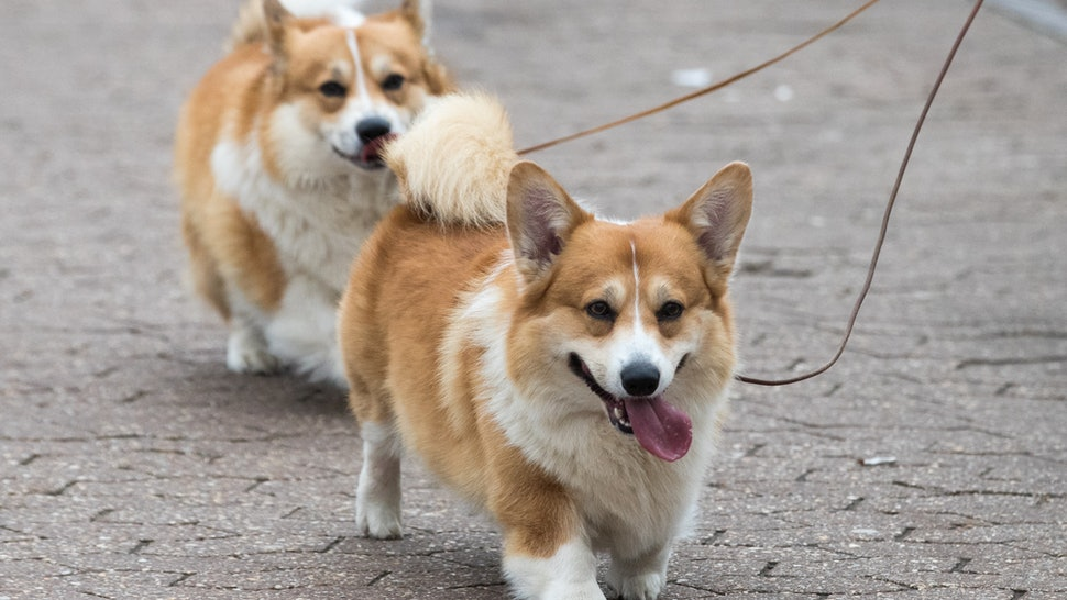 20 Best Dog Breeds For City Living