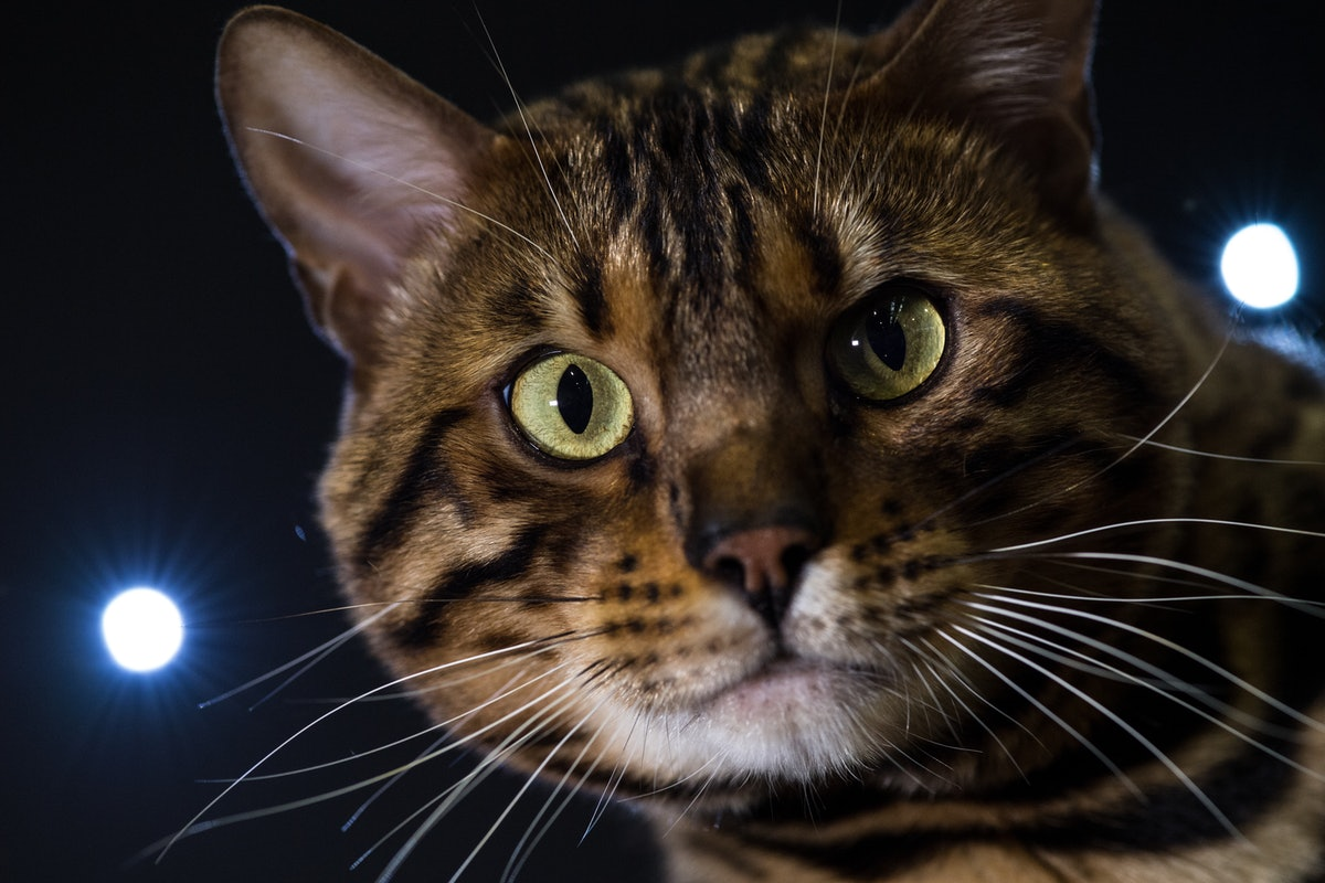 7 Things That Are Toxic To Cats That You Probably Have At Home Right Now