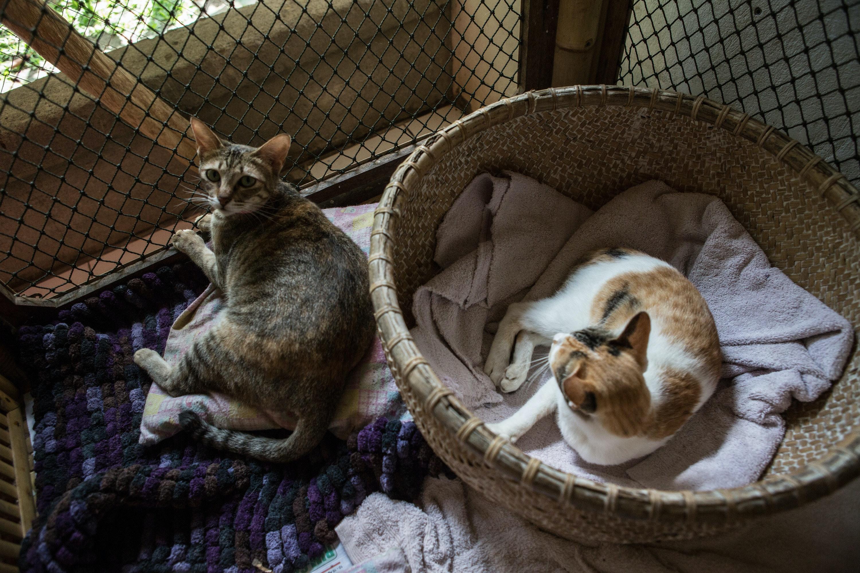 Pregnant Cats Nesting