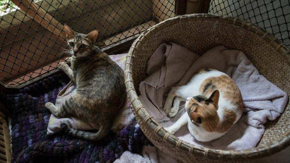 Unlike Some People Our Cat Follows >> 7 Signs Your Cat Might Be Pregnant That You Should Definitely Pay