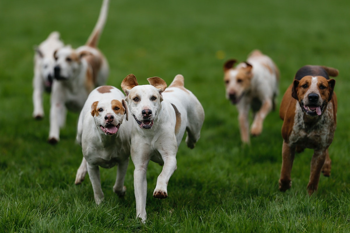 Am I Ready To Get A Dog? These Are The Most Important Factors To Remember