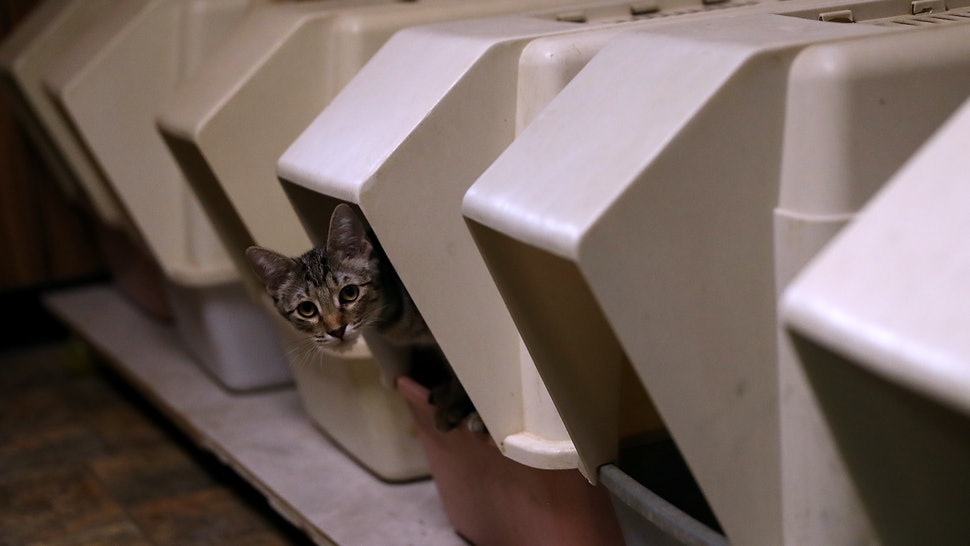 10 Hacks For Smelly Litter Boxes That All Cat-Owners Should Know