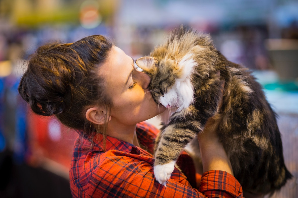 7 Myers-Briggs Types That Are Most Likely To Be Cat People