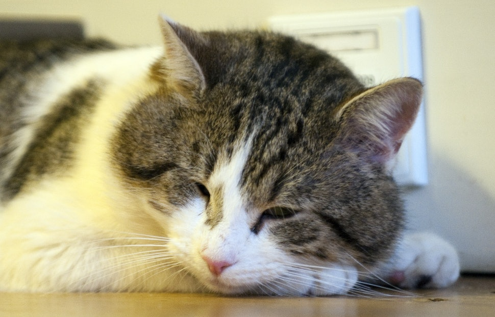 Signs Your Cat May Be Sick