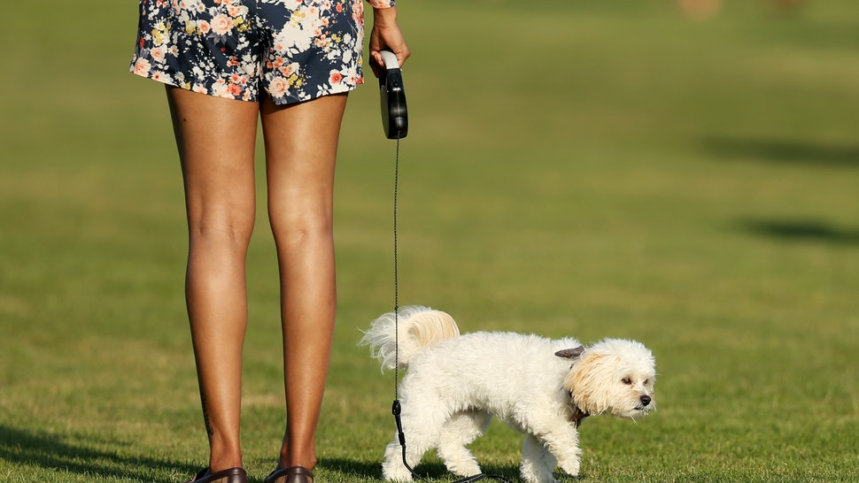 How To Tell If Your Dog May Have Lyme Disease, According To
