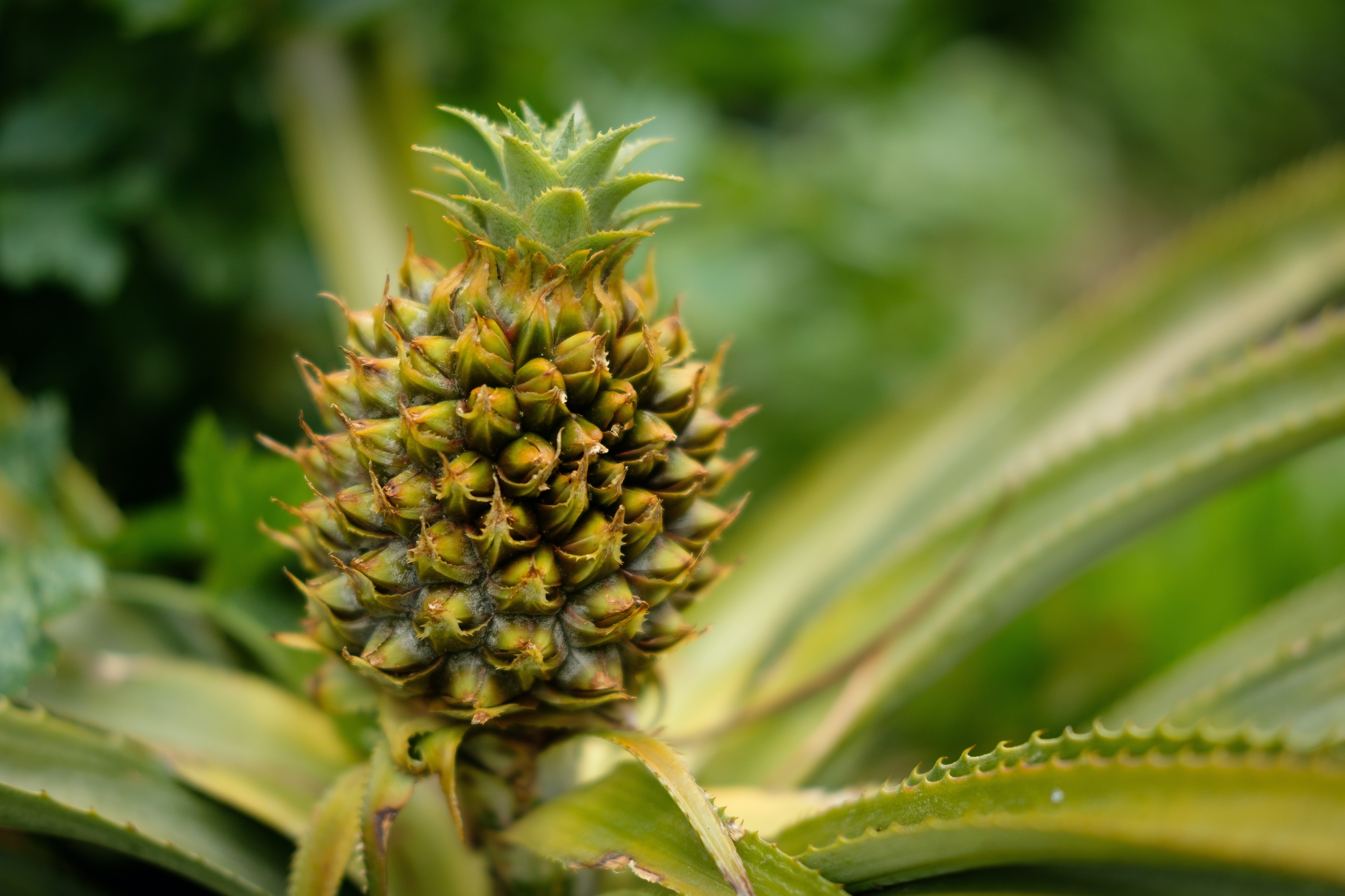 Why Does My Mouth Hurt After Eating Pineapple? No, It's Not