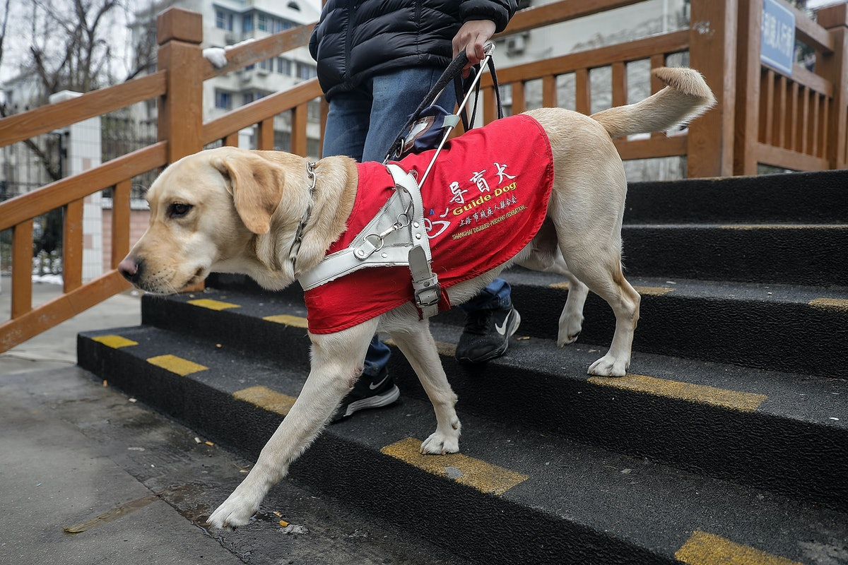 What's The Difference Between A Service Animal, Emotional Support Animal, And Therapy Animal? Here's What You Need To Know