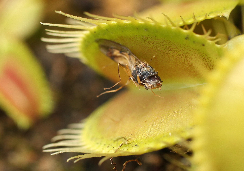 9 Houseplants That Can Help Repel Bugs Mosquito Repellent Circuitbest Repellentindoor