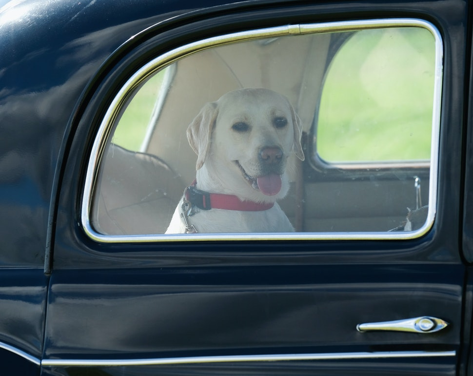 How To Keep Your Dog From Getting Car Sick Because They Can Do