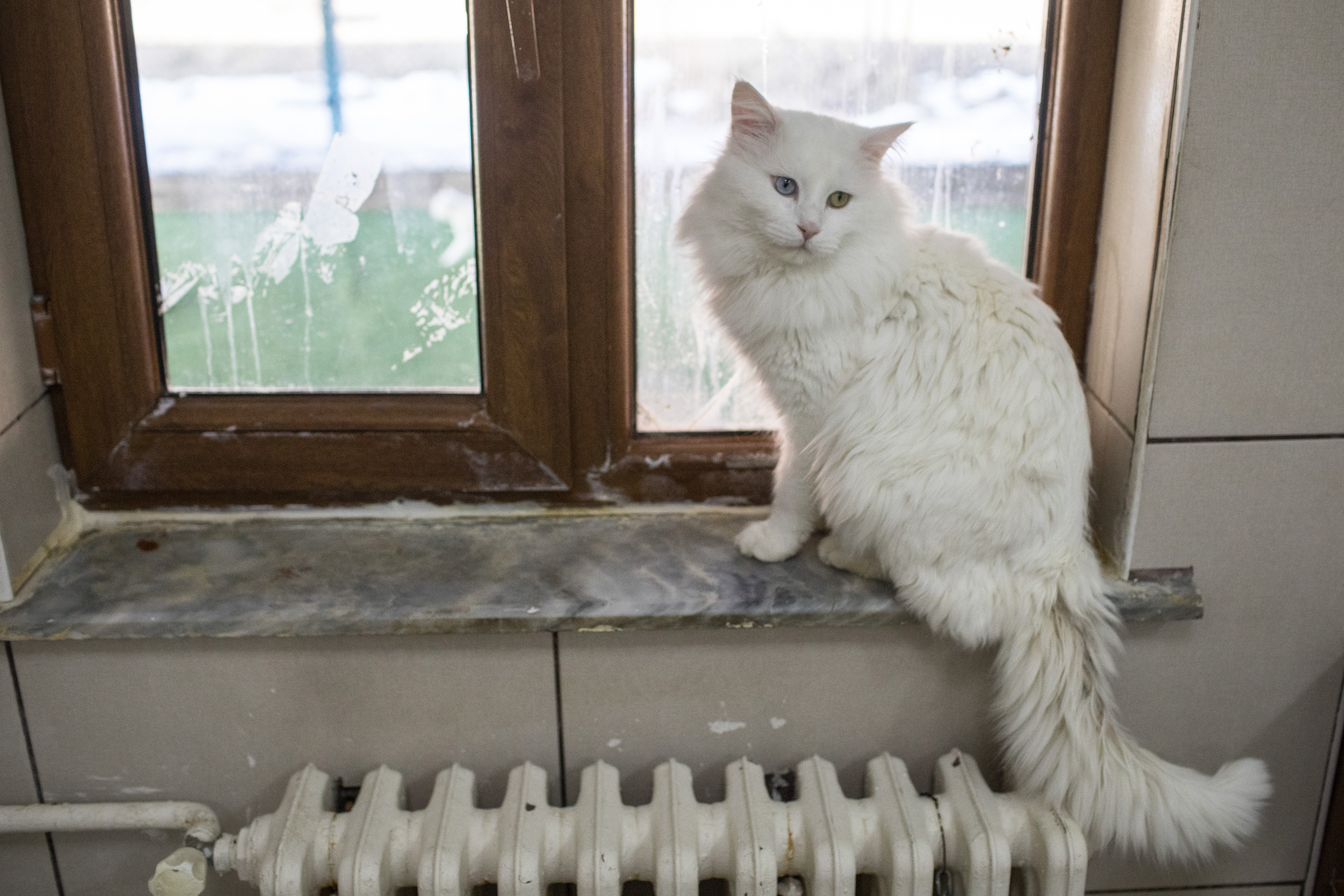 15 Common Things In Your Home You Never Knew Could Harm Your Cat
