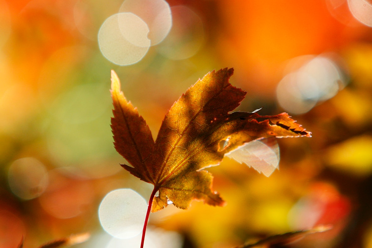 Official Beginning Of Fall: When Is The First Day Of Fall In 2018? Here's Your