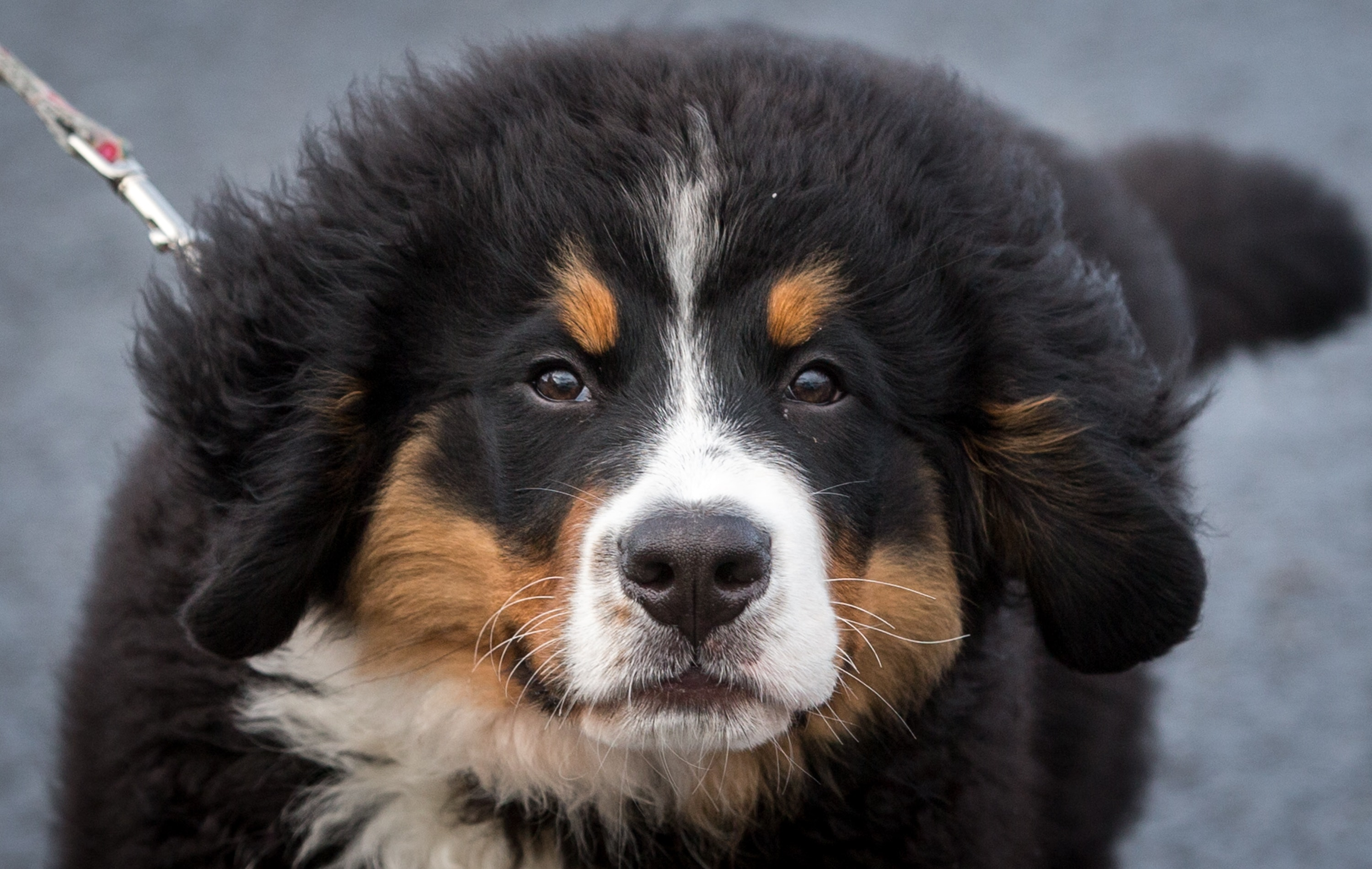 14 Dog Breeds That Grow Really Big