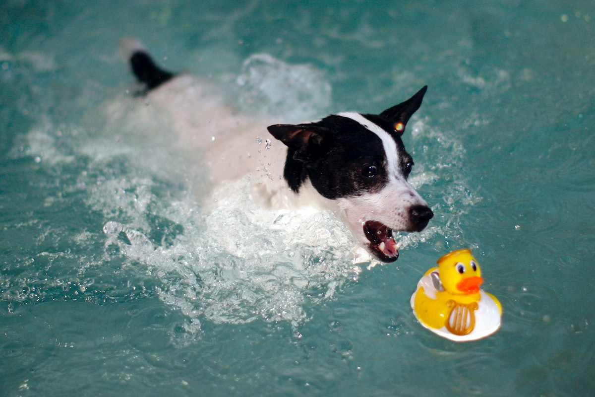 Can You Teach Your Dog To Swim? Here Are 7 Things To Know Before Putting Your Pup In The Water