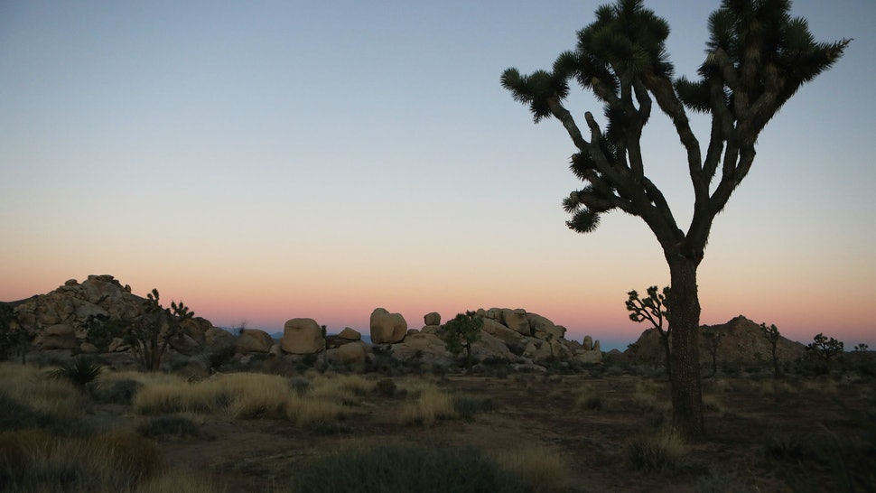 Photos Of Joshua Tree National Park During The Shutdown Show The