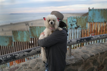 Poodles are one of the best dog breeds for fighting depression.