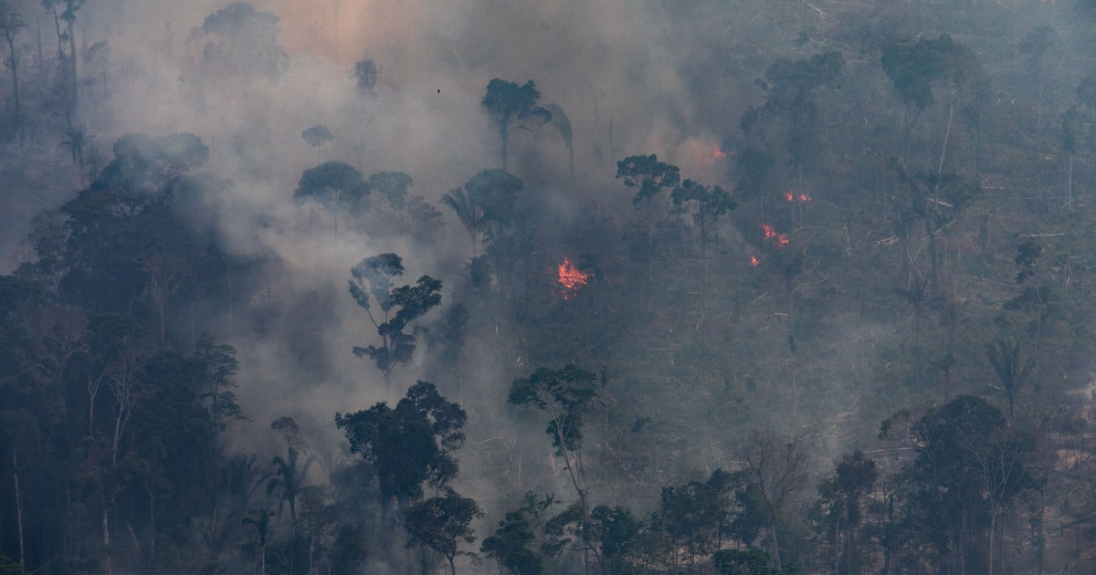 How The UK Fast Food Industry Could Be Linked To The Recent Amazon Rainforest Fires