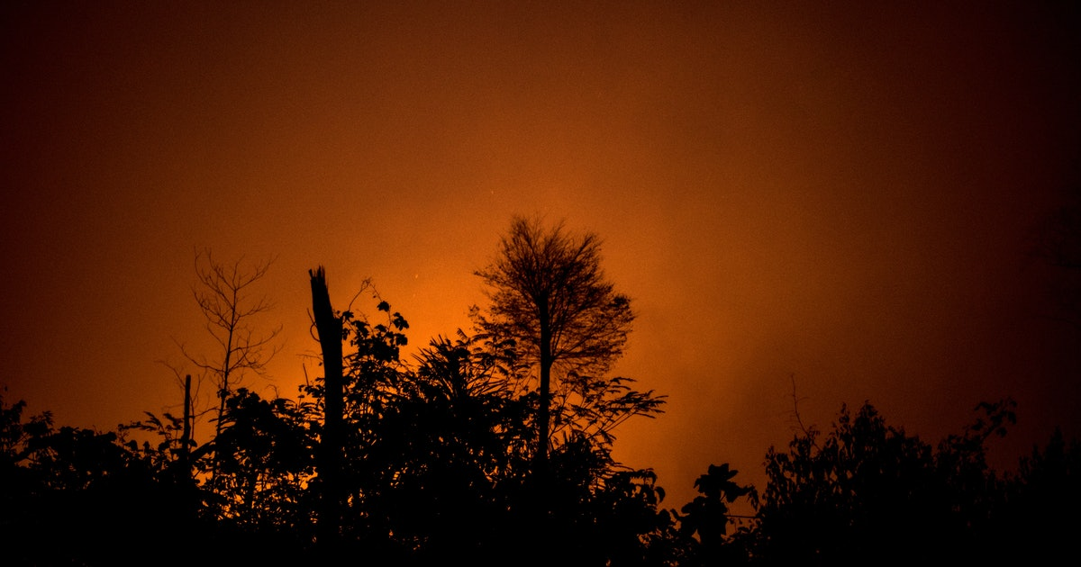 The Amazon Rainforest Is Still Burning, Here's What You Can Do To Help