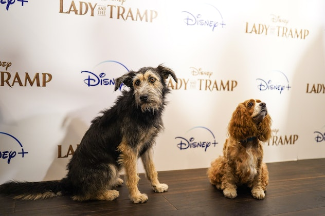With release of new Lady and the Tramp live-action film on Disney+, Fi examined popularity of Disney-inspired dog names