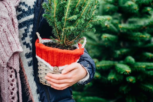 Decorating a living Christmas tree is an easy way to cut down on holiday waste.
