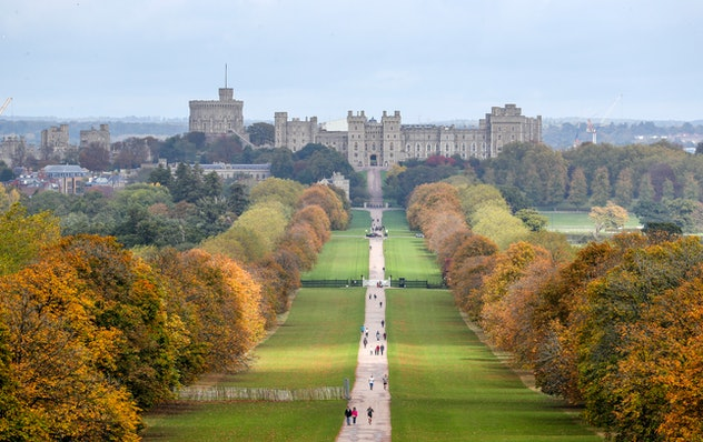 Thankfully, venomous spiders don't live under Windsor Castle.