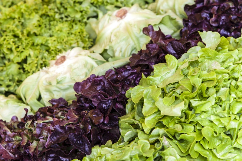 Various kinds of lettuce are laid out in a gorcery store, ready to be purchase. Ready Pac lettuce has been tested positive for E. coli, health officials say.