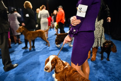 Anyone can watch the 2019 National Dog Show on NBC or on the NBC Sports app.