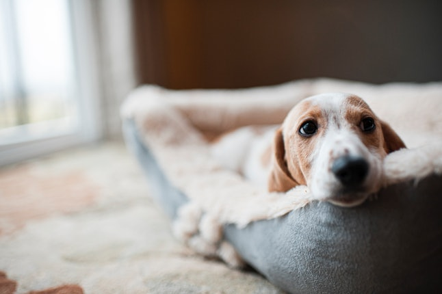 Your dog could be older or younger in human years than you thought