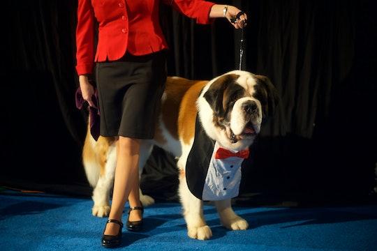 The National Dog Show will air on NBC on Thursday, Nov. 28.