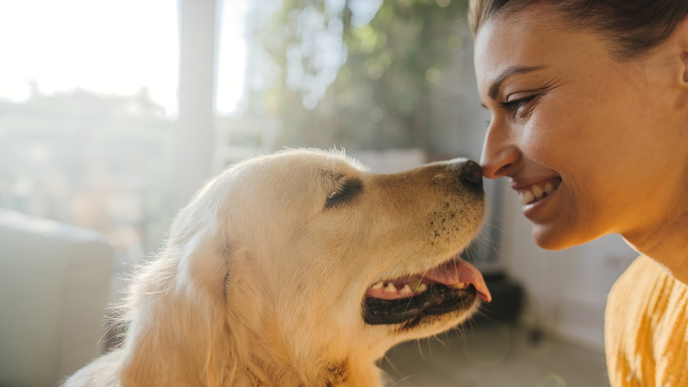 Scientists have worked out a new way to calculate your dog's age in human years