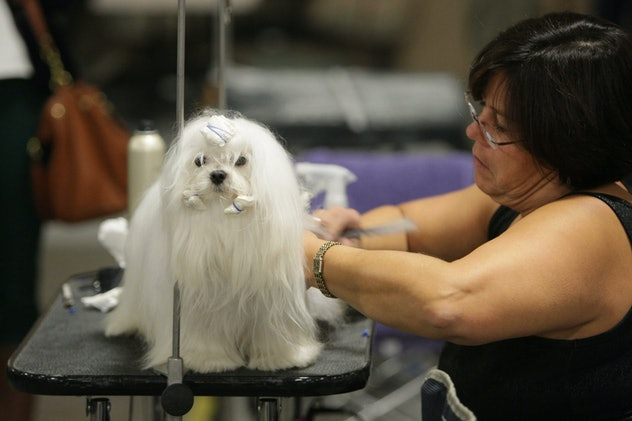 Big or small, all dogs are celebrated in photos from previous years' National Dog Show.