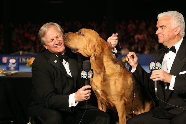 Previous champions sometimes return to help hosts narrate, as photos from previous years' National Dog Shows will show.